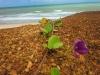 fasinerende-liv-i-naturen-087
